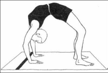 chakrasana  hatha yoga rishikesh